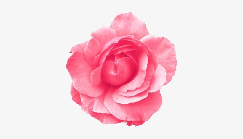 Roses Transparent Tumblr - Light Blue Flower Transparent Background@seekpng.com