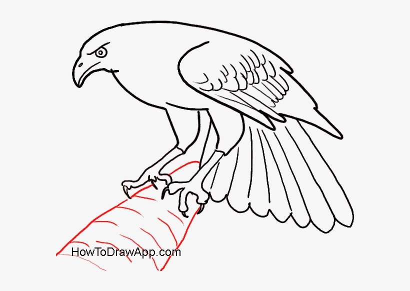 How To Draw An Eagle Bird Eagle Bird Easy Drawing Png