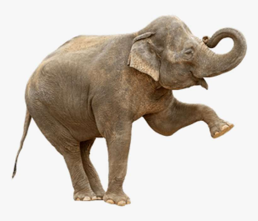 Indian Elephant Png Elephants Are The Only Animal That Can T Jump Png Image Transparent Png Free Download On Seekpng If you like, you can download pictures in icon format or directly in png image format. indian elephant png elephants are the