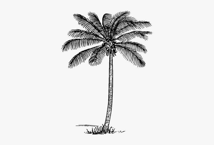Coconut Tree Clipart Realistic Palm Tree Clip Art Png Image