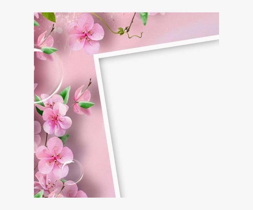 Pink Flower Frame Flowers Wallpaper For Phone Png Image Transparent Png Free Download On Seekpng