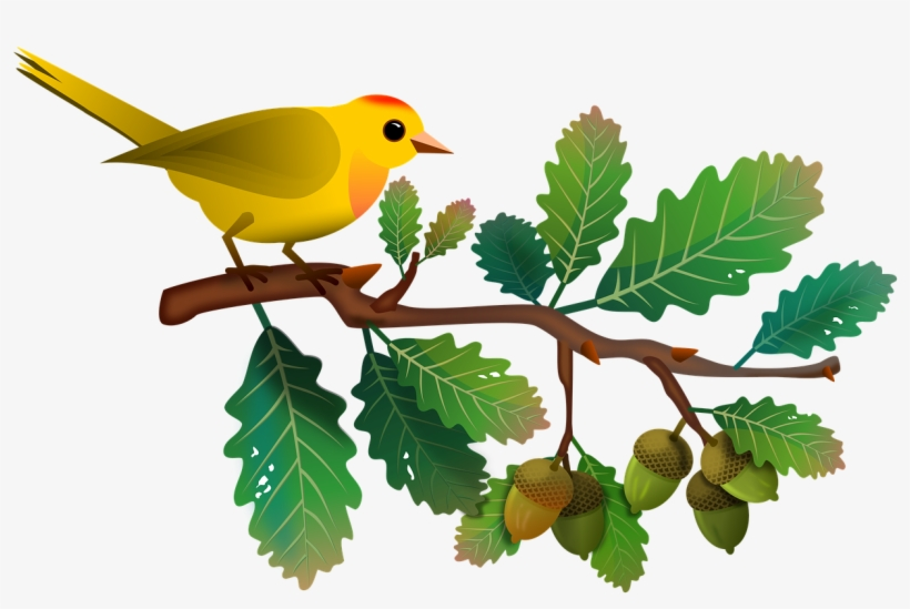 Oak Tree Branch Gambar Ilustrasi Flora Fauna Png Image Transparent Png Free Download On Seekpng