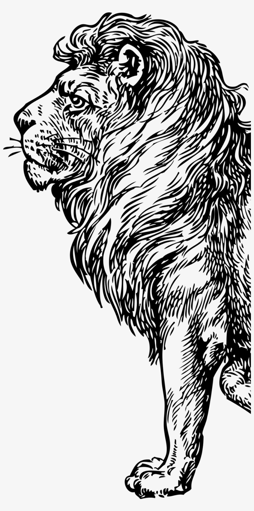 Vision Lion Lion Full Body Drawing Png Image Transparent