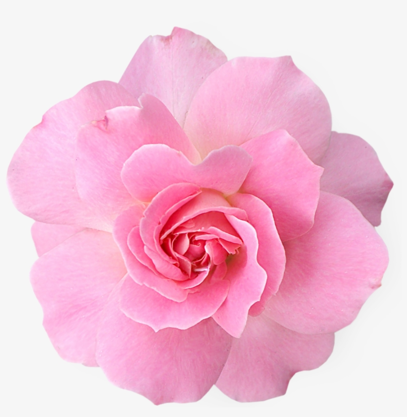 Pink Rose Clipart Png Tumblr Pink Flower Png Transparent Png Image