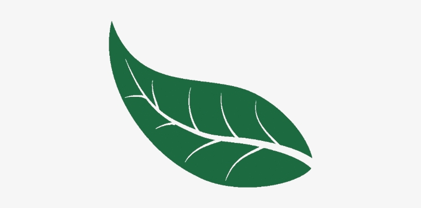 Folhas De Arvore Desenho