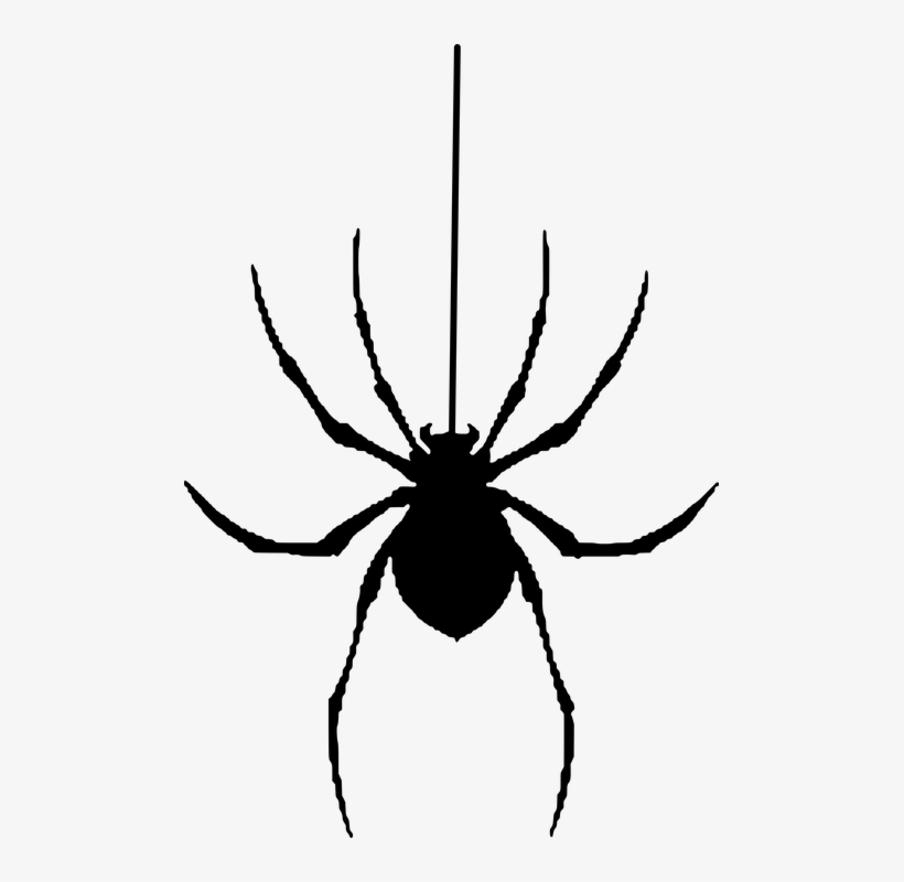 Halloween Spider Clipart.Spider Silhouette Halloween Insect Spooky Halloween Spiders Clipart Png Image Transparent Png Free Download On Seekpng