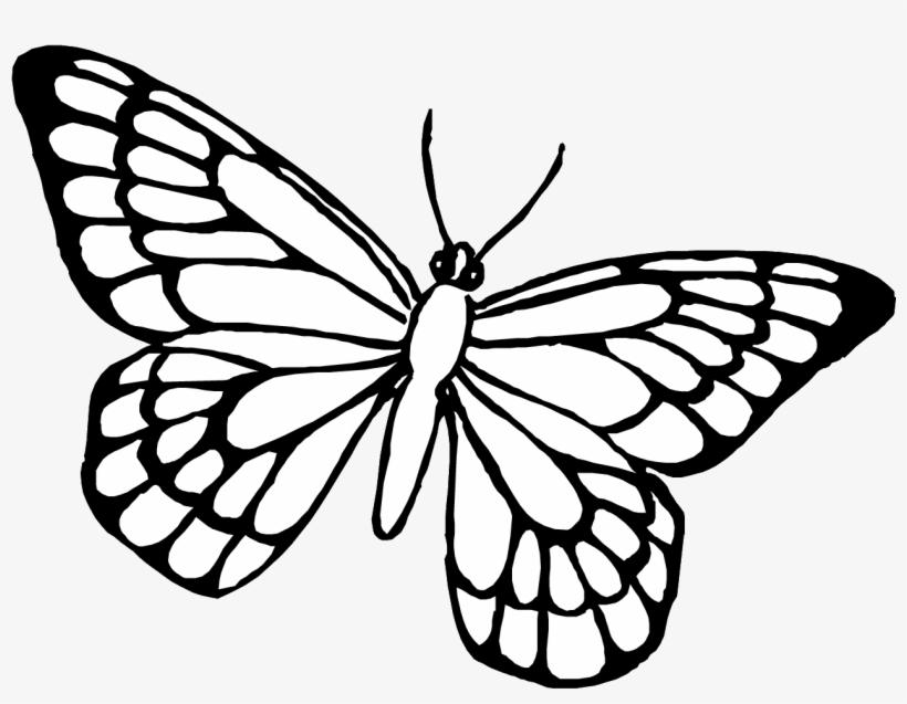 Dibujo Para Colorear Mariposa Animales 85 Pginas Para Deep Red