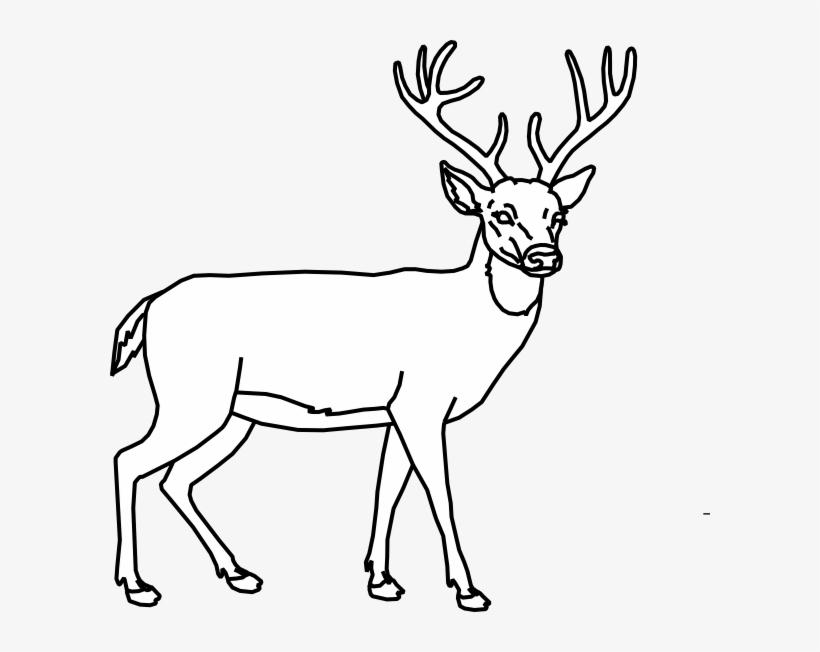 Deer Outline Clip Art At Clker Dessin De Cerf Facile Png Image