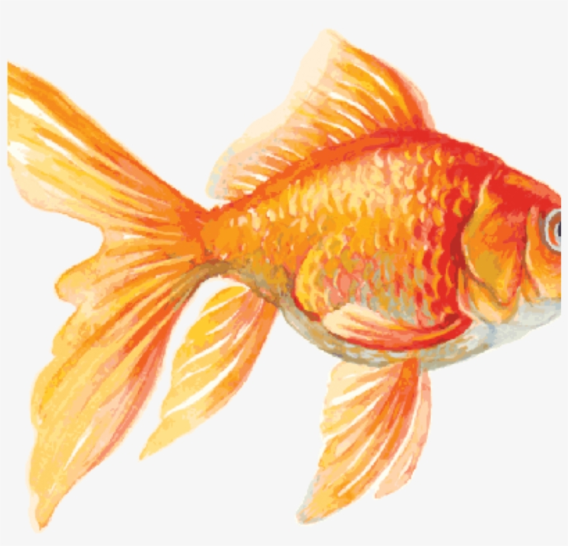 Goldfish Clip Art 15 Goldfish Clipart For Free Download