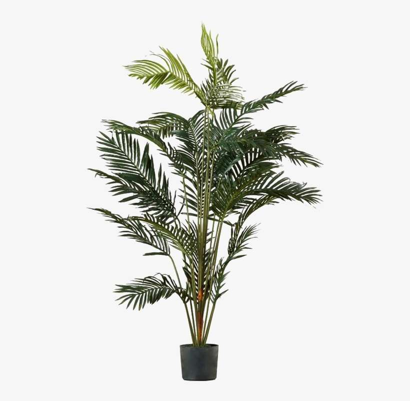 Palm Tree Png Image Transparent - Palm Tree Pot Plant PNG