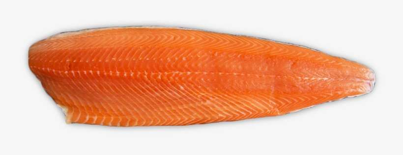 Salmon Fillet Png@seekpng.com