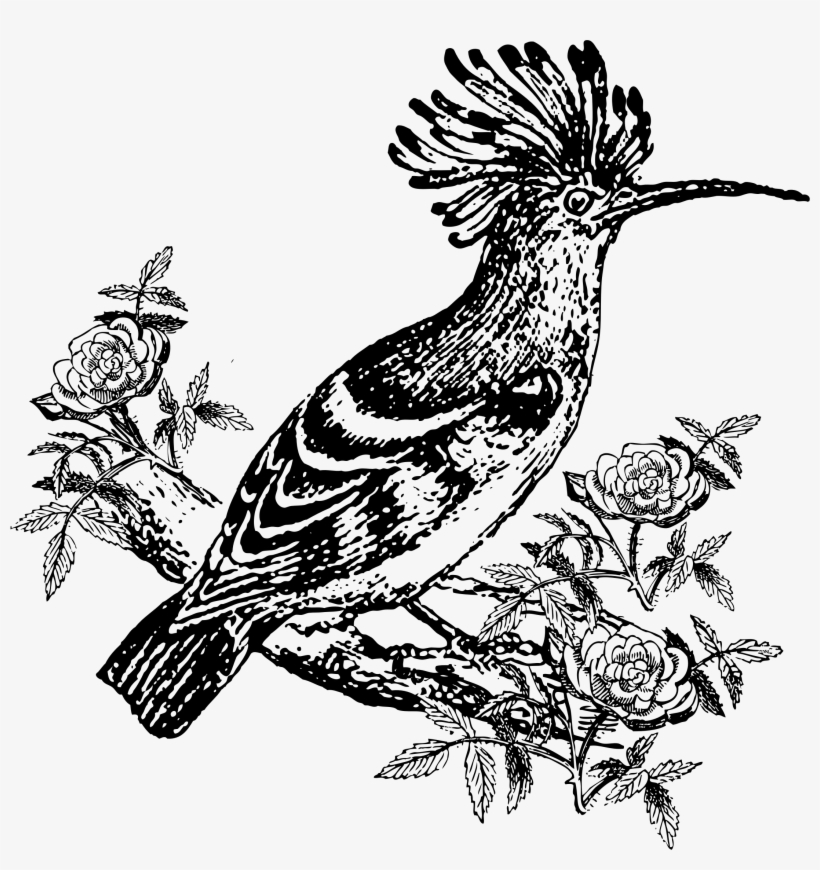 Mockingbird Clipart Burung