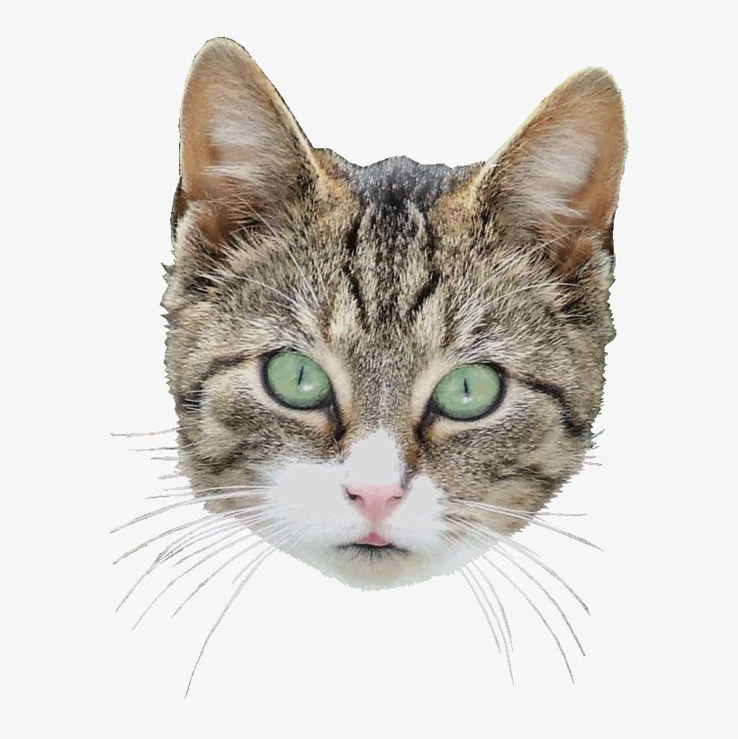 полуострове честь картинки голова кошек приезжал озеро