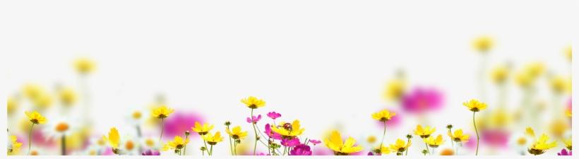Free Flower Overlay, Photoshop Overlays Photoshop Overlays