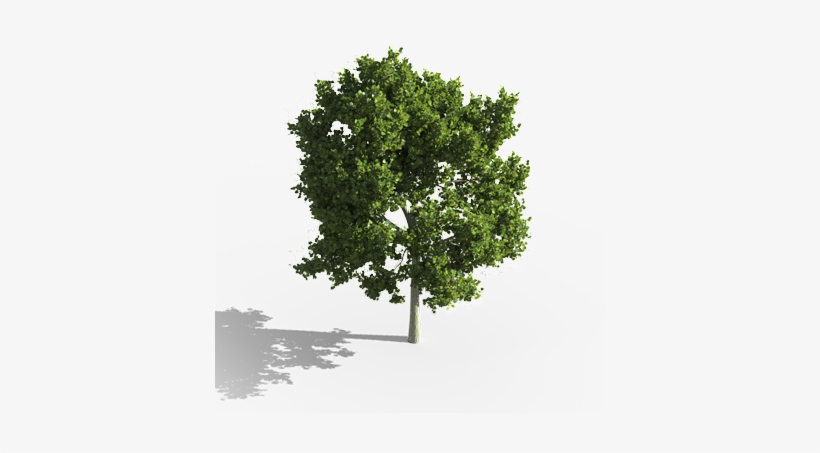 aerial tree png d plants for cg artists - tree aerial png png image
