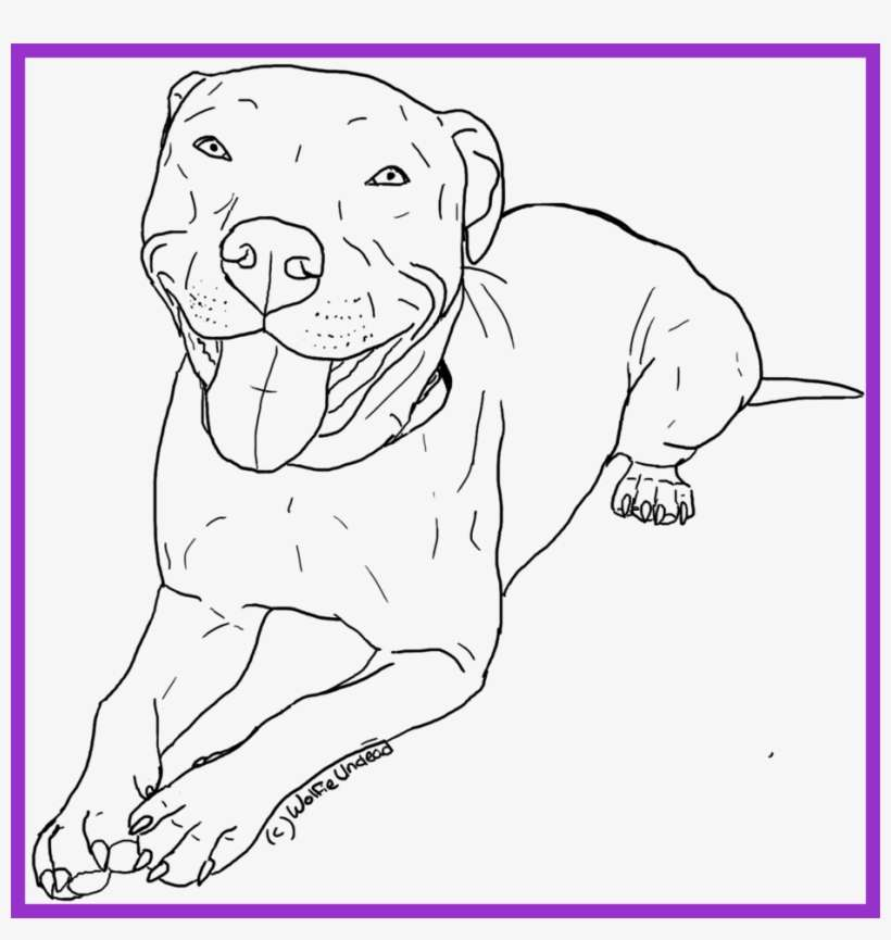 Boston Terrier Coloring Pages - Coloring Home | 865x820