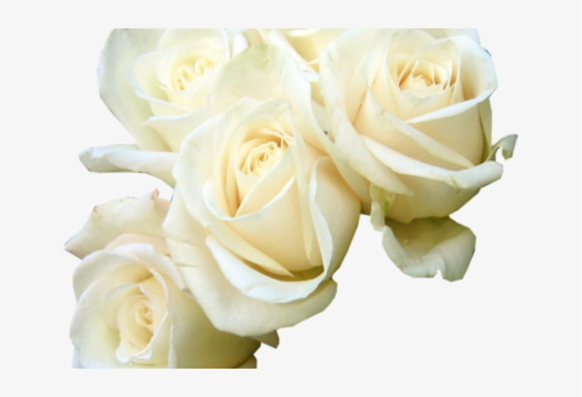 White Rose Png Transparent Images Good Morning Flowers Rose White