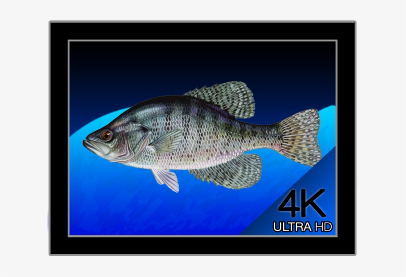 9200 Ide Aquarium Design Software Free Download HD Gratid Download Gratis