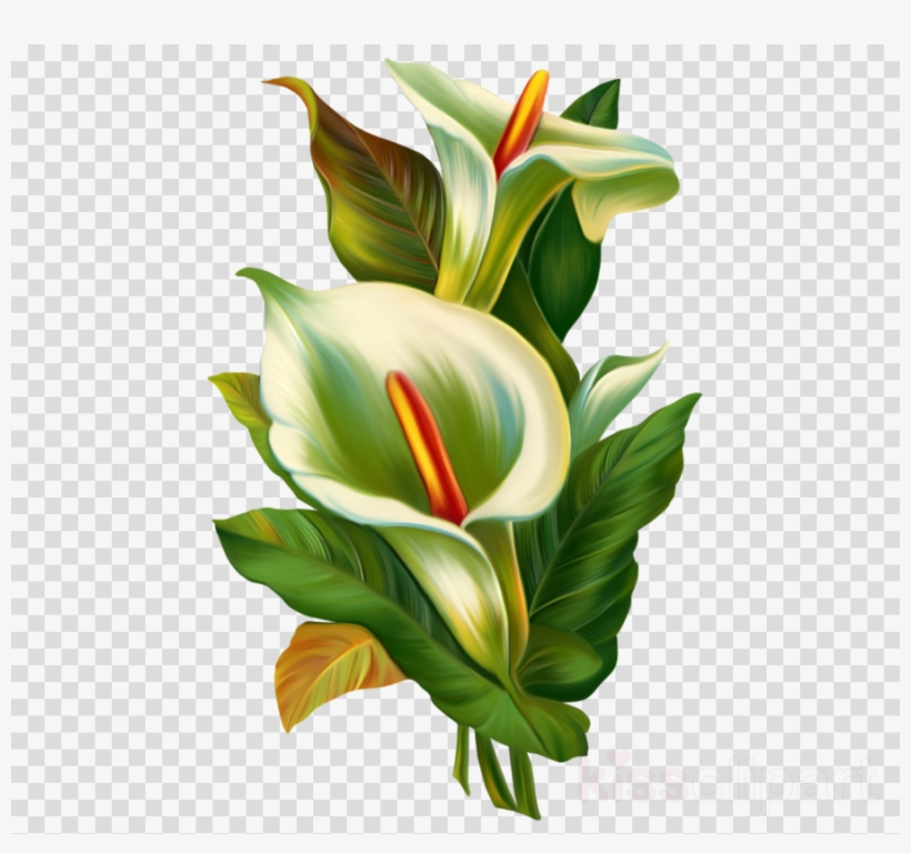 Calla Lily Tattoo Clipart Arum Lily Flower Calla Lily Frame Tattoo