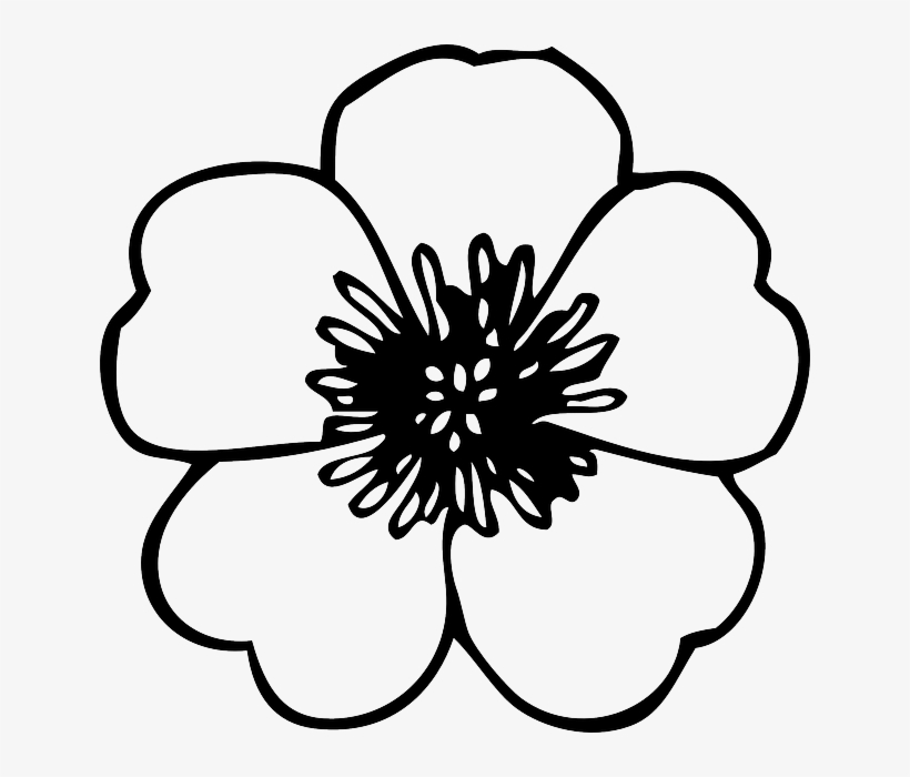 Flower Drawings - Spring 2019 | Flower drawing, Flower line ... | 700x820