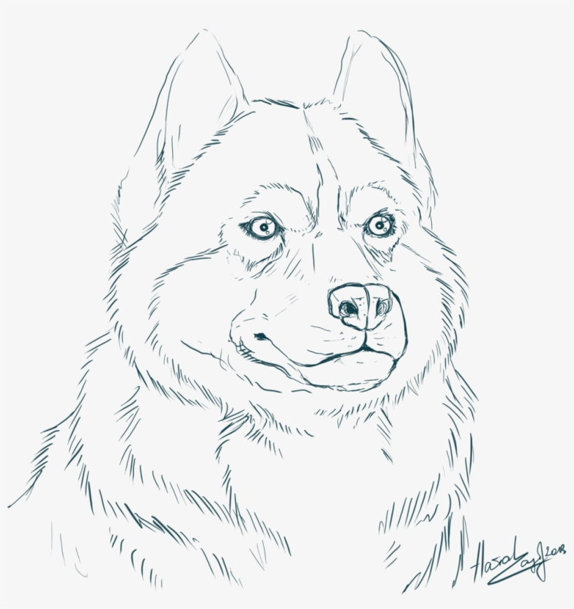 Siberian Husky Coloring Pages With Realistic Realistic Husky