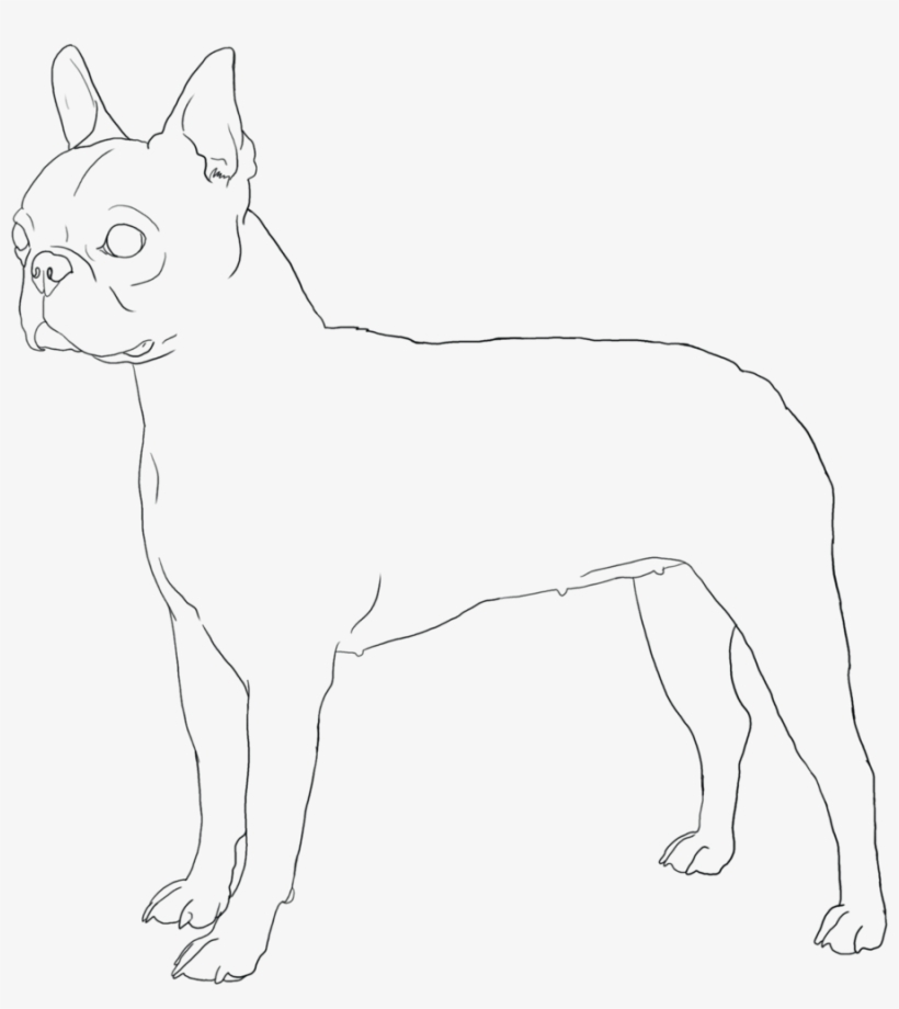 Boston Terrier Coloring Pages Puppies And Page Qqa - Boston ...