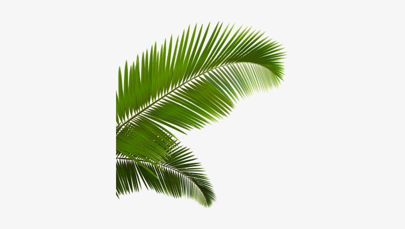 Palm Fronds Png Vaporwave Palm Tree Transparent Png Image Transparent Png Free Download On Seekpng