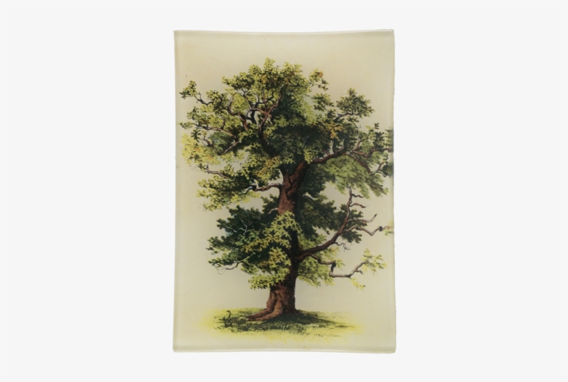 Hk Living Kussens : Tree tree hk living kussen big oak tree png image