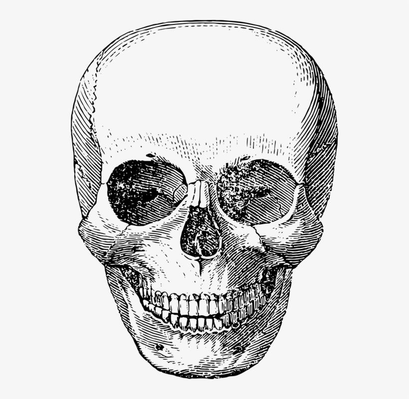 Skeleton Face Clipart