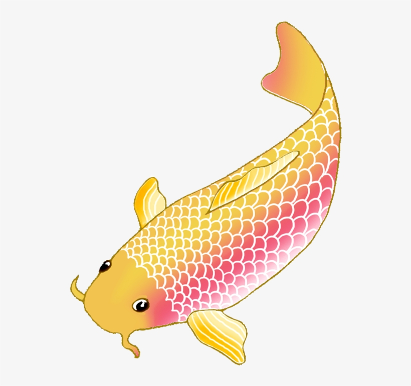 Colorful Koi Fish Drawings Clip Library Download Koi Fish Clipart Transparent Png Image Transparent Png Free Download On Seekpng