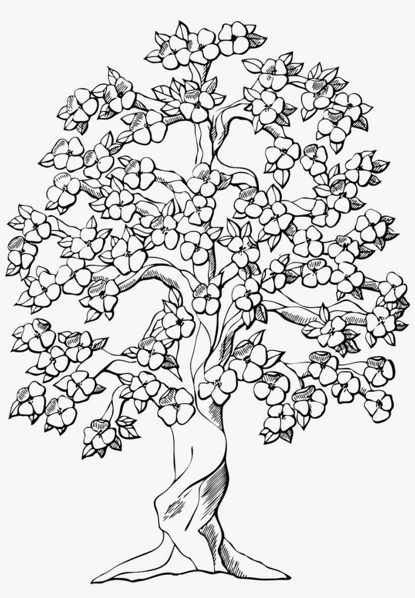 Magnolia Tree At Getdrawings Com Free For Tree With Flowers