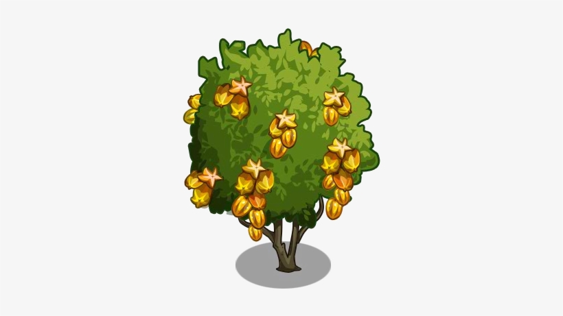 durian clipart star fruit golden star fruit tree png image transparent png free download on seekpng durian clipart star fruit golden star
