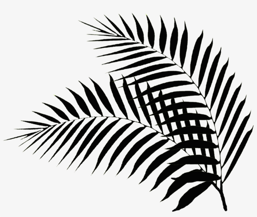 Palm Leaf Drawing Png Palm Leaves Black And White Png Image Transparent Png Free Download On Seekpng