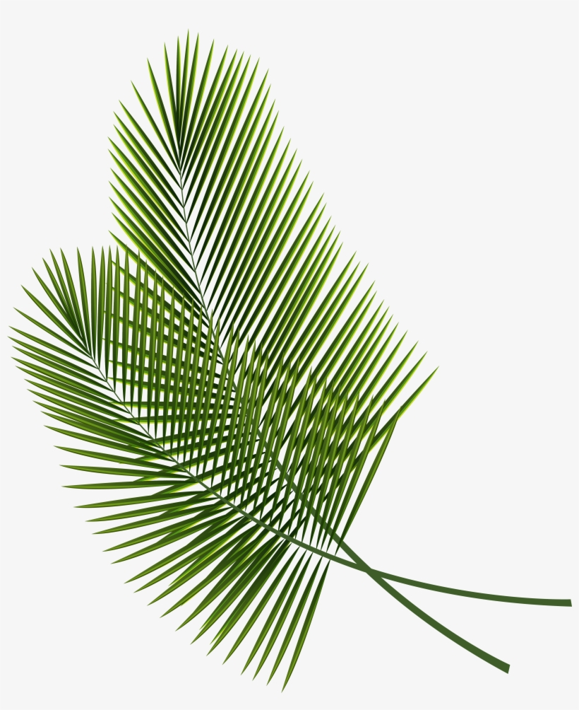 Tropical Leaves Png Clipart Image Tropical Leaves Clip Art Png Image Transparent Png Free Download On Seekpng 2020 popular 1 trends in home & garden, home improvement, toys & hobbies, automobiles & motorcycles with tropical leaf wall art and 1. tropical leaves png clipart image