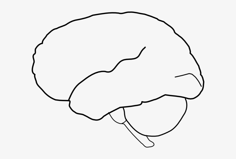 brain clipart outline drawing of the brain png image transparent png free download on seekpng brain clipart outline drawing of the