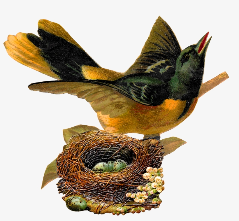 Bird Nest Eggs Oriole Image Artwork Illustration Clipart
