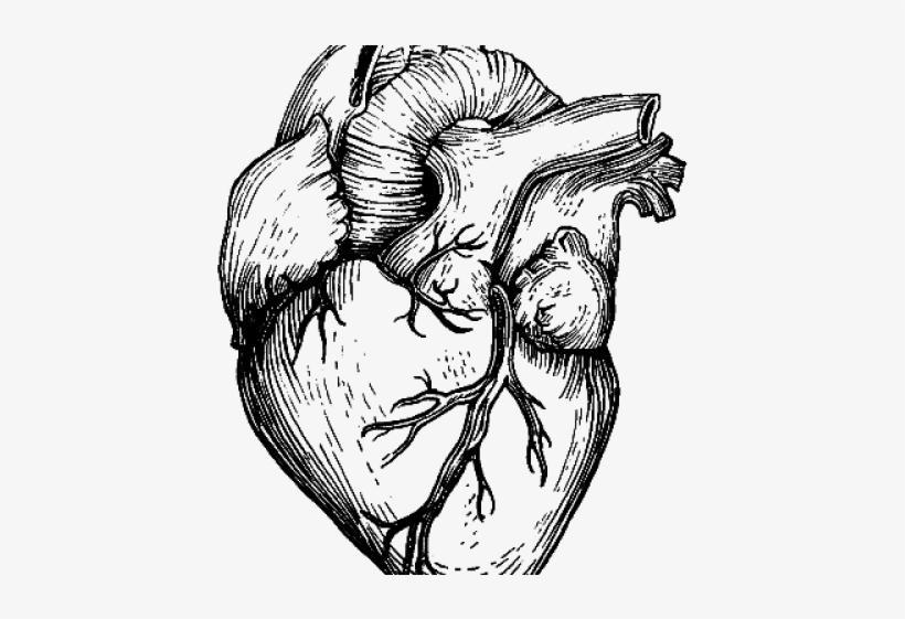 Human Heart Sketch Png PNG Image   Transparent PNG Free