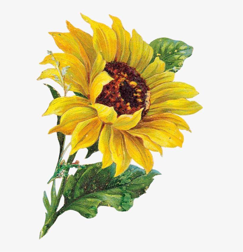Tournesol Watercolor Flower Clip Art Sunflower Watercolor ...