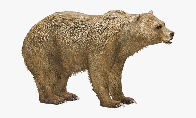 Syrian Brown Bear Syrian Brown Bear Png Png Image Transparent Png Free Download On Seekpng Over 1371 bears png images are found on vippng. syrian brown bear png png image
