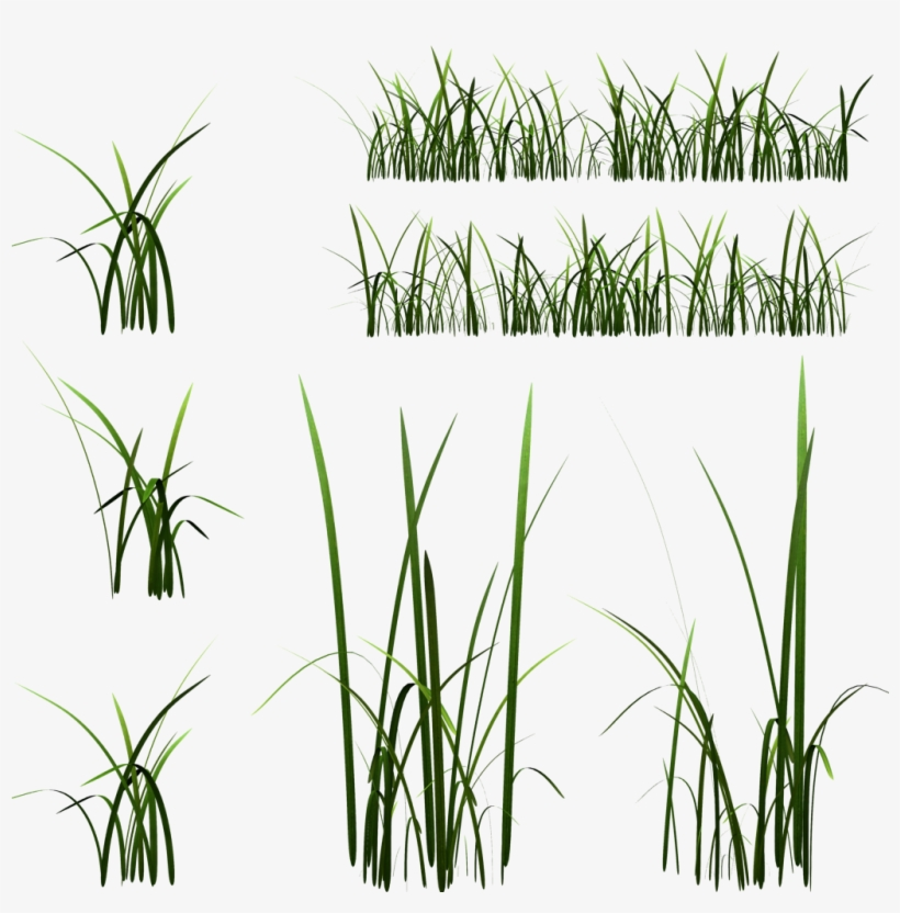 2d Grass Blade Texture - High Grass Texture Transparent@seekpng.com