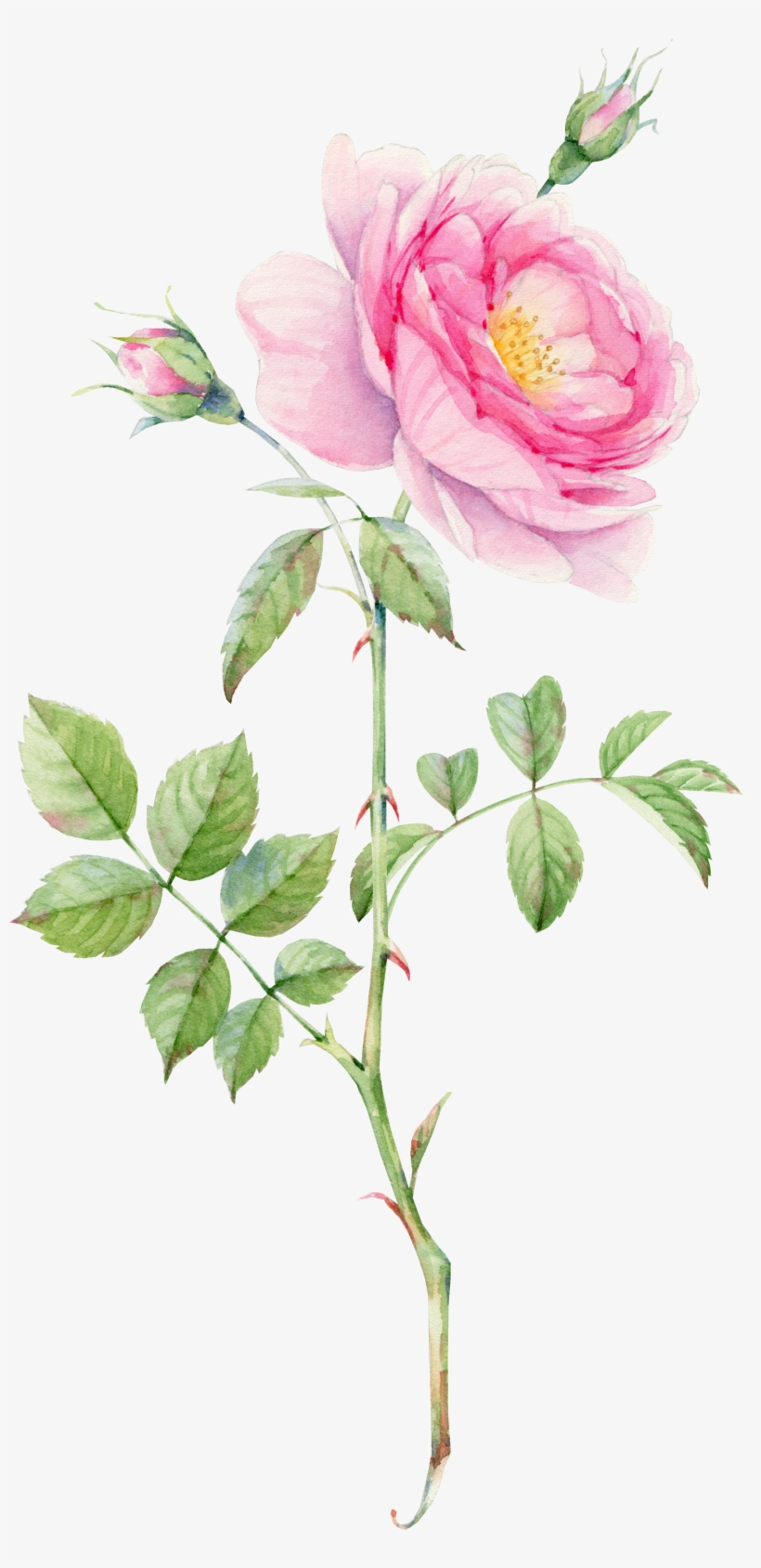 0 素材4 Plant Drawing Rose Bouquet Flower Bouquets Rose Leaf