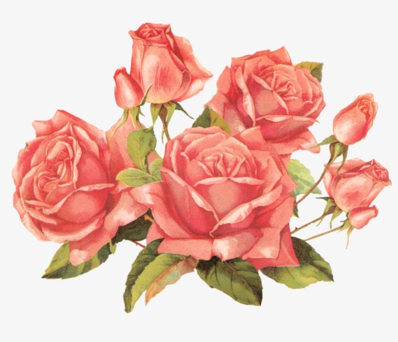 Pink Rose Clipart Png Tumblr Roses Transparent Png Image