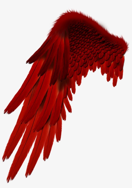 Report Abuse - Devil Wings For Picsart Editing@seekpng.com