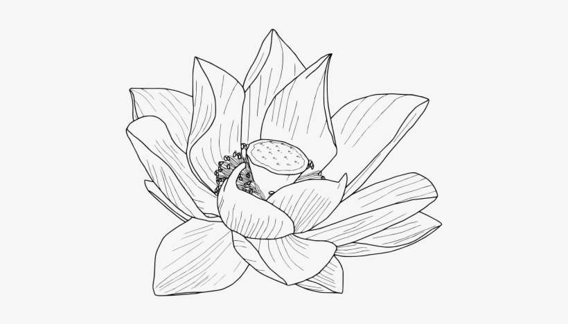 Drawn Crown Tumblr Transparent Lotus Flower Outline Png Png Image