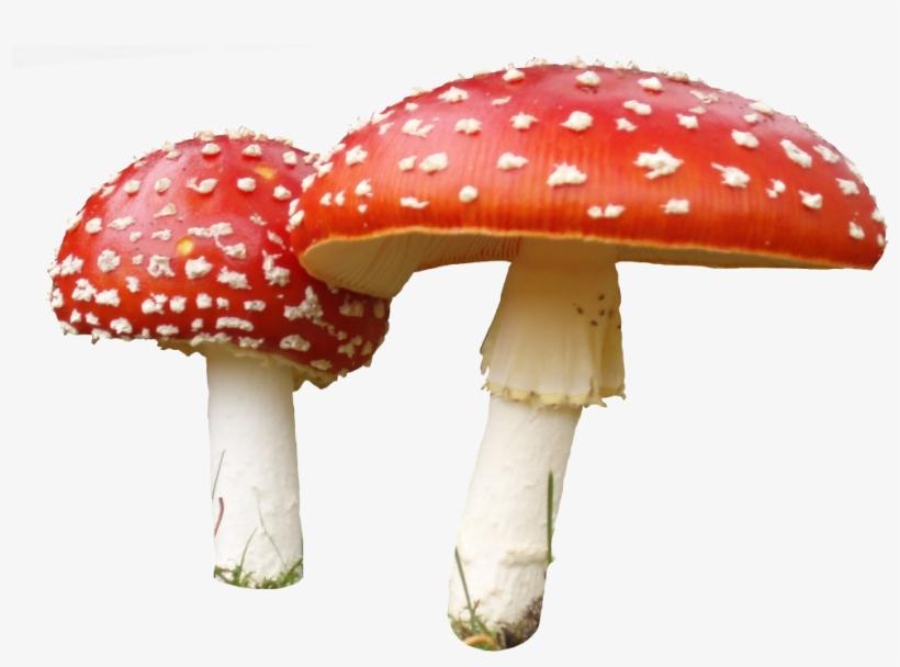 Transparent Background Mushroom Png Png Image Transparent Png