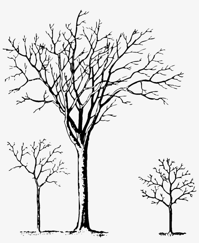 Pine Tree Clipart Black And White Christmas Tree Clip Art Png Image Transparent Png Free Download On Seekpng
