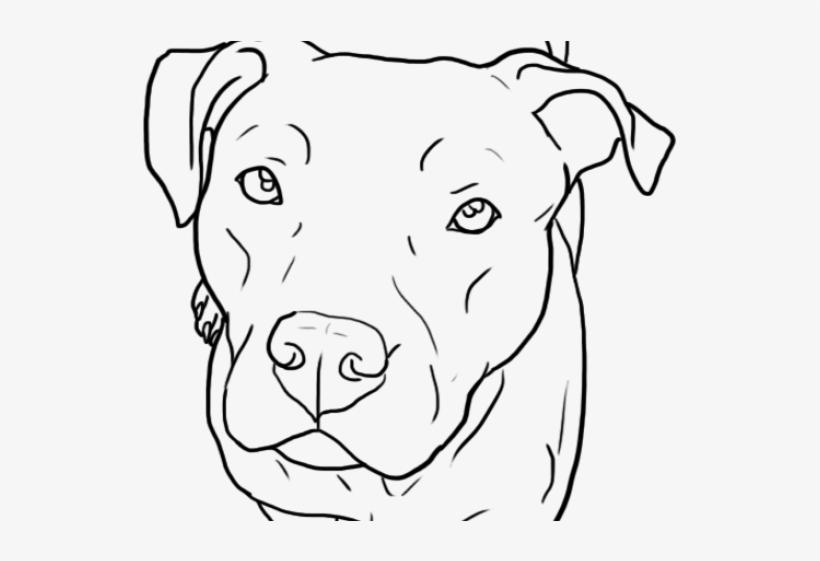 Website pit bulls Pit Bull