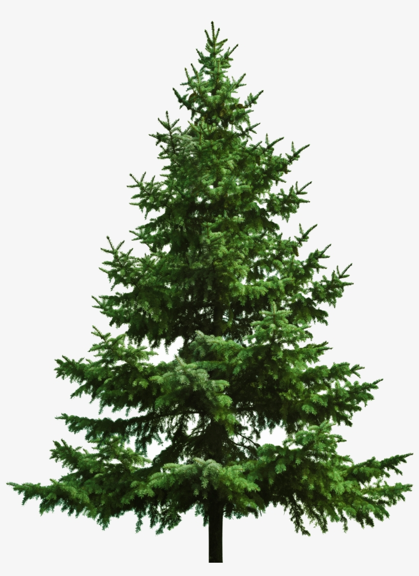 Bare Christmas Tree Svg.Bare Christmas Tree Christmas Tree White Background Png