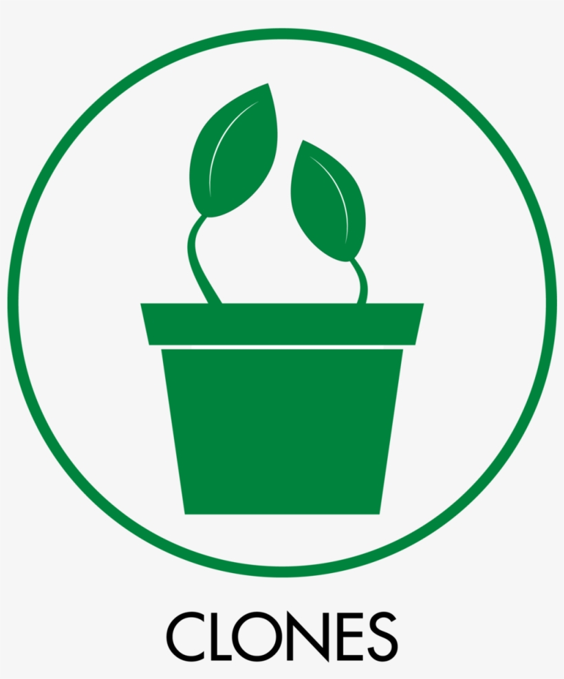 Category Icons Clones Cannabis Clone Icon Png Image