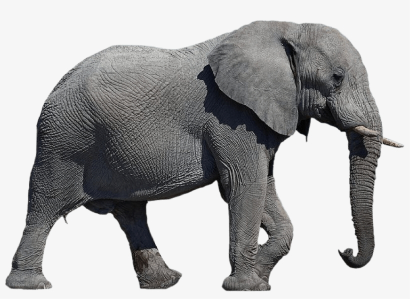 Free Png Elephant Png Images Transparent African Elephant No Background Png Image Transparent Png Free Download On Seekpng Cartoon illustration, cute little gray like transparent background png clipart. free png elephant png images